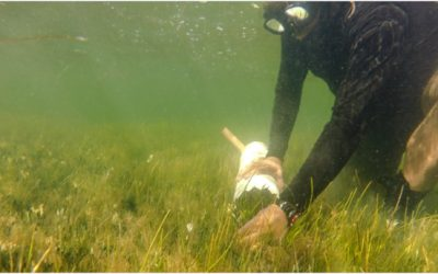 Investigando el estado de los pastos marinos en la Laguna Madre