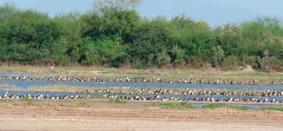 DUMAC busca alternativas al cambio de uso de suelo en Sinaloa y Sonora